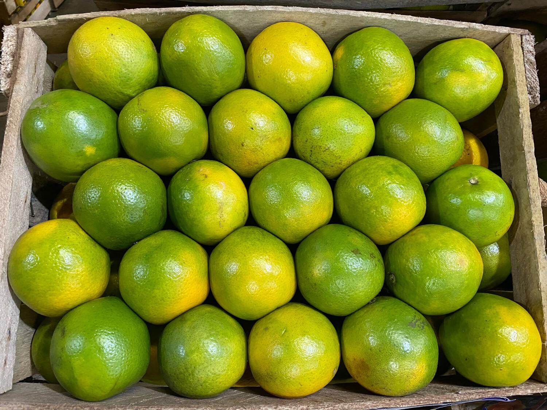 Naranja x cajón 19 kilos valencia