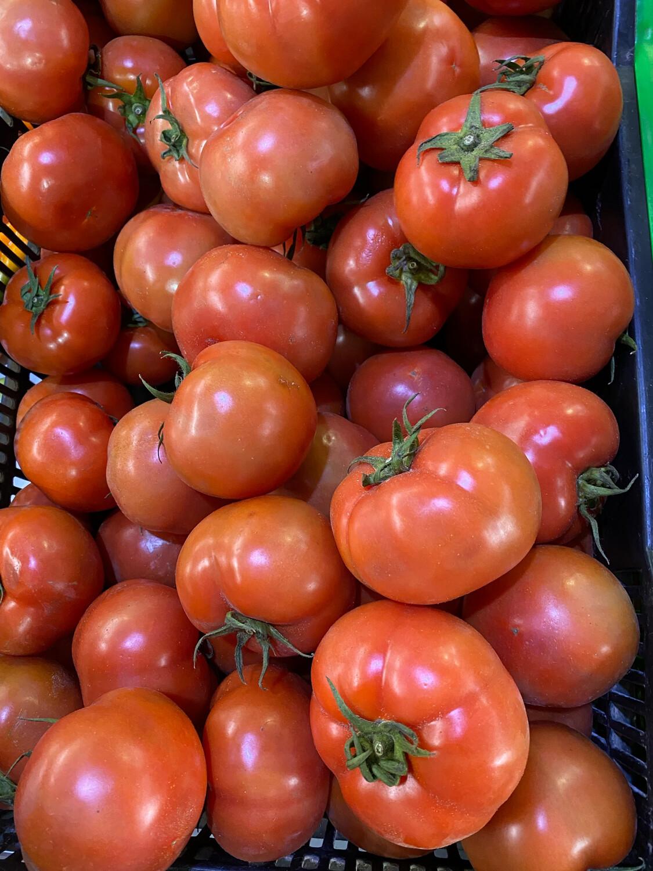Tomate extra x kilo hidroponico
