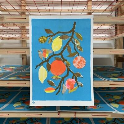 Citrus in Pool