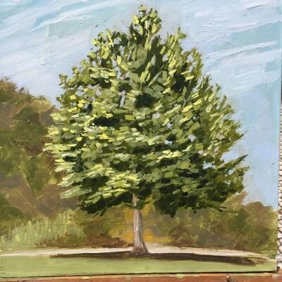 Summertime Tree in Silves