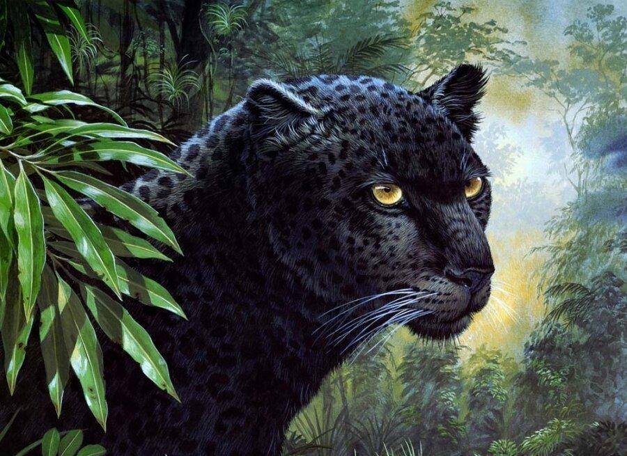 Картина по номерам 40х50 - Пантера
