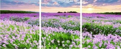 Картина по номерам PX 5241 Поле весенних цветов 40х50см*3