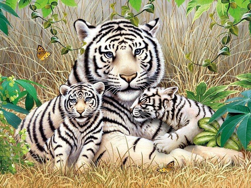 Картина по номерам 40х50 - Белые тигры