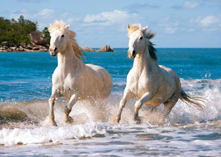 Картина по номерам 40х50 - Две белые лошадки