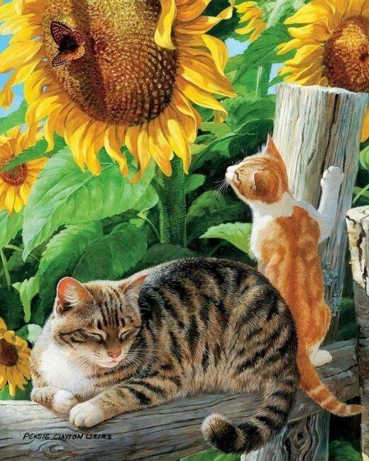 Картина по номерам 40х50 - Деревенские кошки