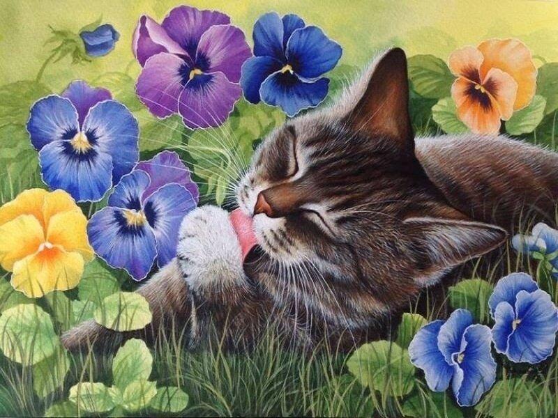 Картина по номерам 40х50 - Довольный кот