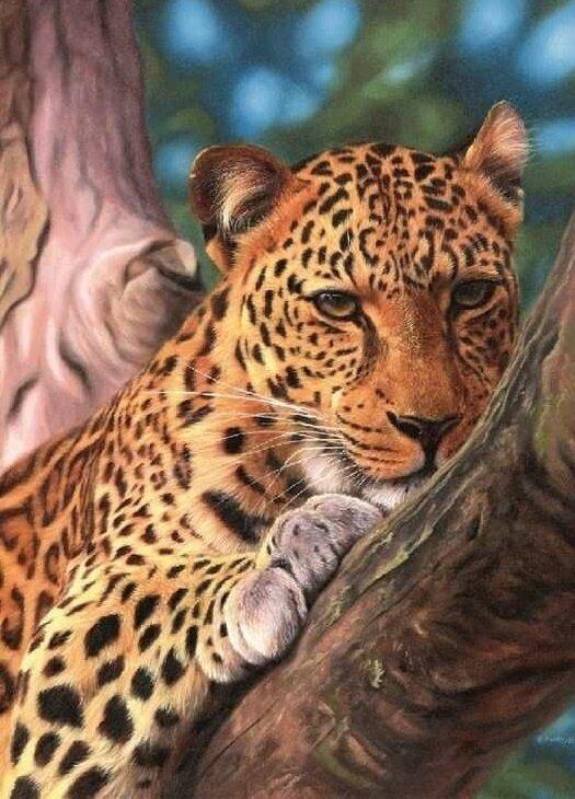 Картина по номерам 40х50 - Задумчивый леопард