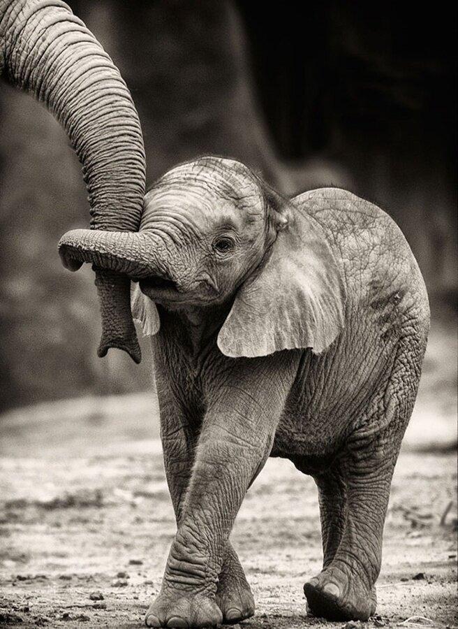 Картина по номерам 40х50 - Слонёнок