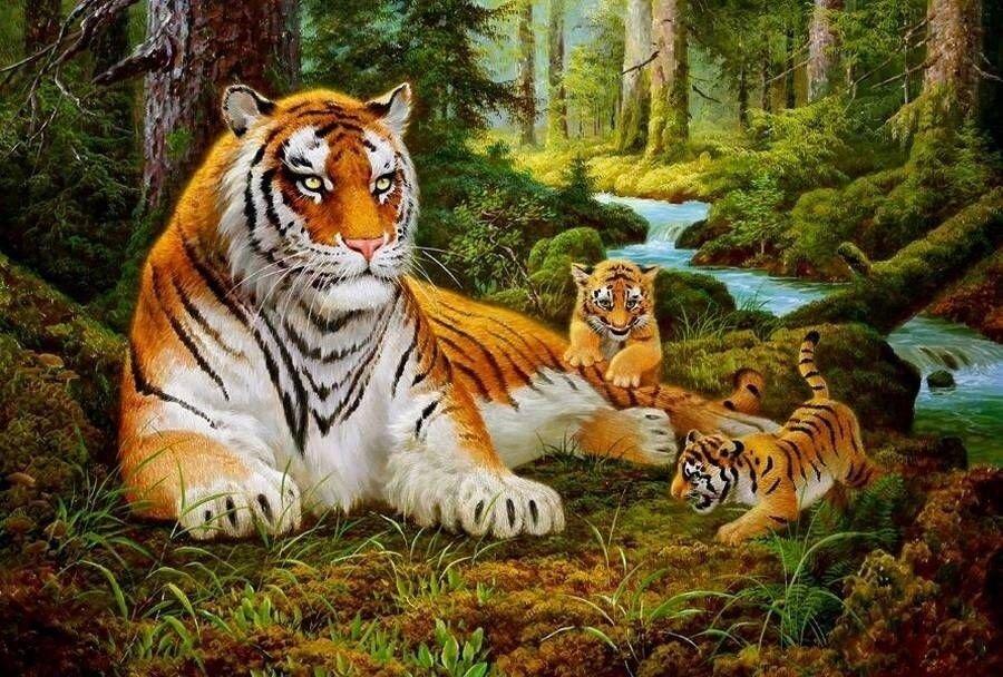 Картина по номерам 40х50 - Тигр и тигрята