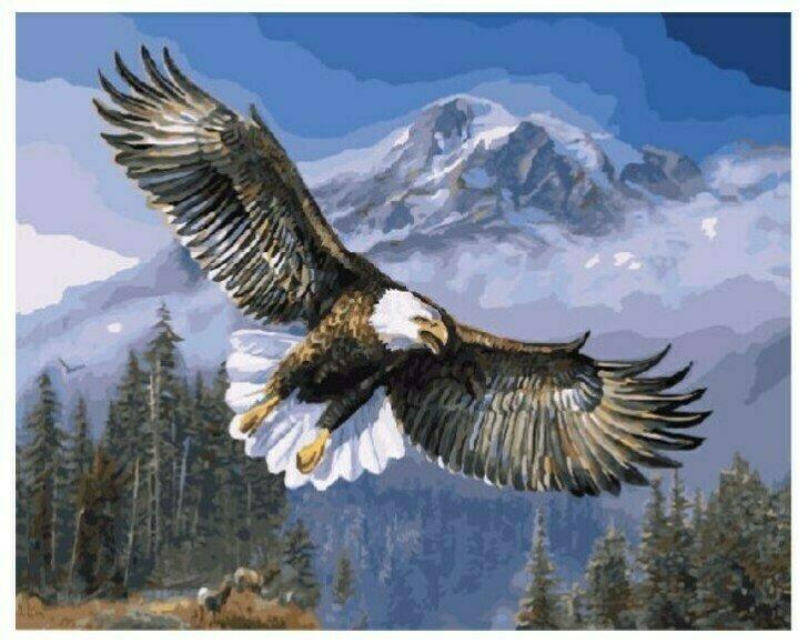 Картина по номерам GX 7134 Белоголовый орлан 40*50