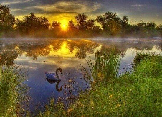 "Картина по номерам Paintboy GX8829 ""Рассвет и туман"" 40х50см"