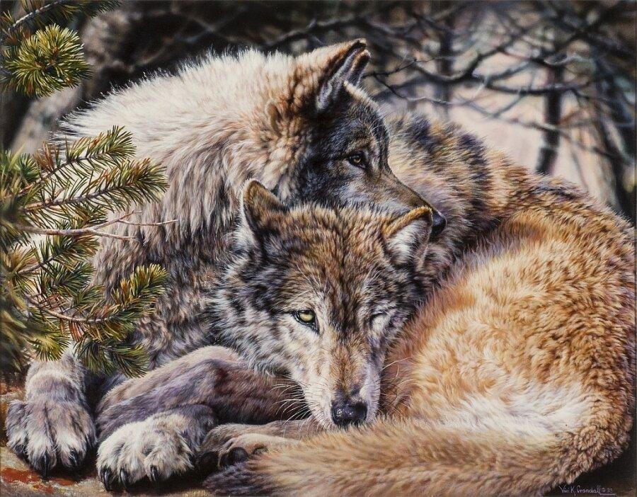 "Картина по номерам Paintboy GX9521 ""Волчья пара"" 40х50см"