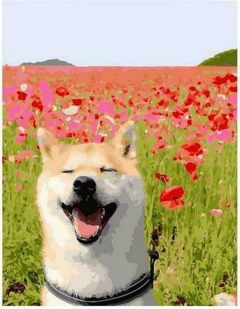 Картина по номерам PK68012 Счастливый пес в маковом поле 40х50см