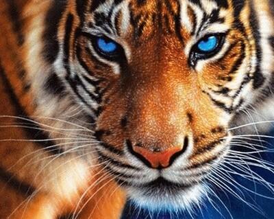 Картина по номерам 40х50см - Взгляд тигра