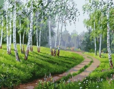 Картина по номерам 40x50см - Дорога в берёзовом лесу