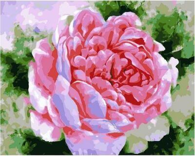 Картина по номерам Paintboy PK 11405 Аромат нежности 40х50см