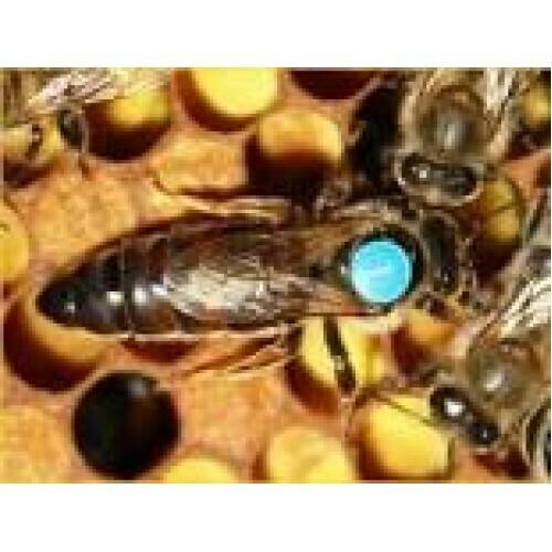 "пчелопакеты ""Карника"""