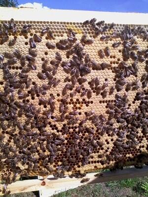 "Пчелопакет ""Карпатка"" 77 линия"