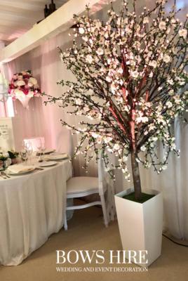 220cm Blossom Trees in White Pot