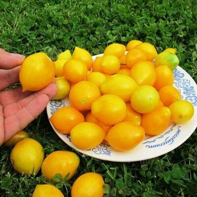Помидоры Giagiù (Yellow Piennolo del Vesuvio) - Джаджу