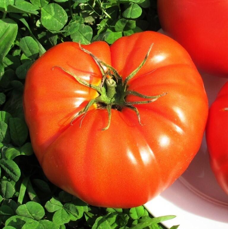 Помидоры Бабушкина Селекция - Tomato Babuschka Selection