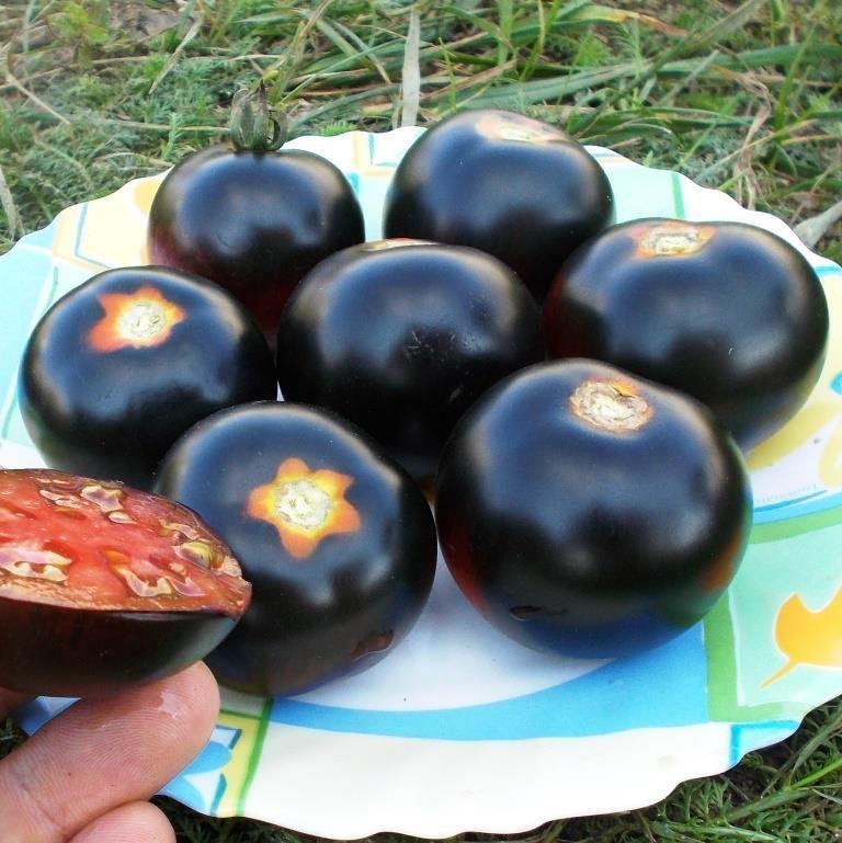 Помидоры Каштановый Шоколадный - Chestnut Chocolate Tomato