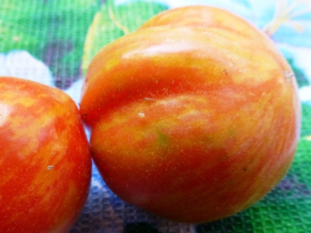 Помидоры Elberta Peach - Полосатый Персик