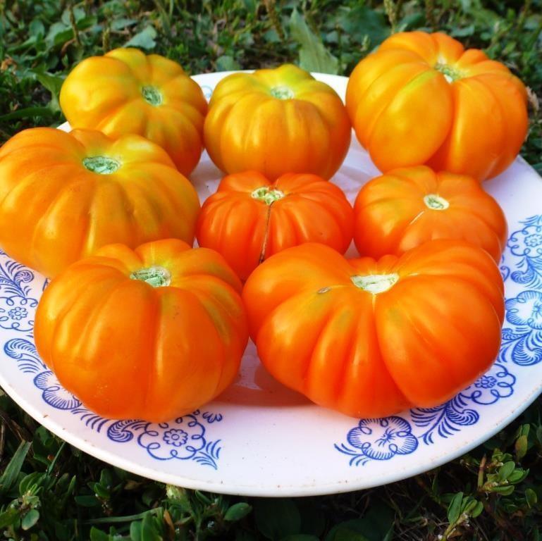 Помидоры Togorific Yellow Tomato — Тогорифик Жёлтый