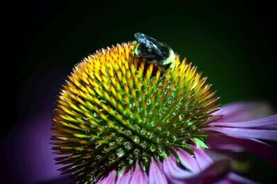 BEE GLORY | 32