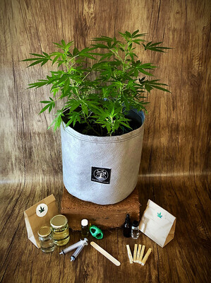 Preflower Box 2 ( 1 X 20L )
