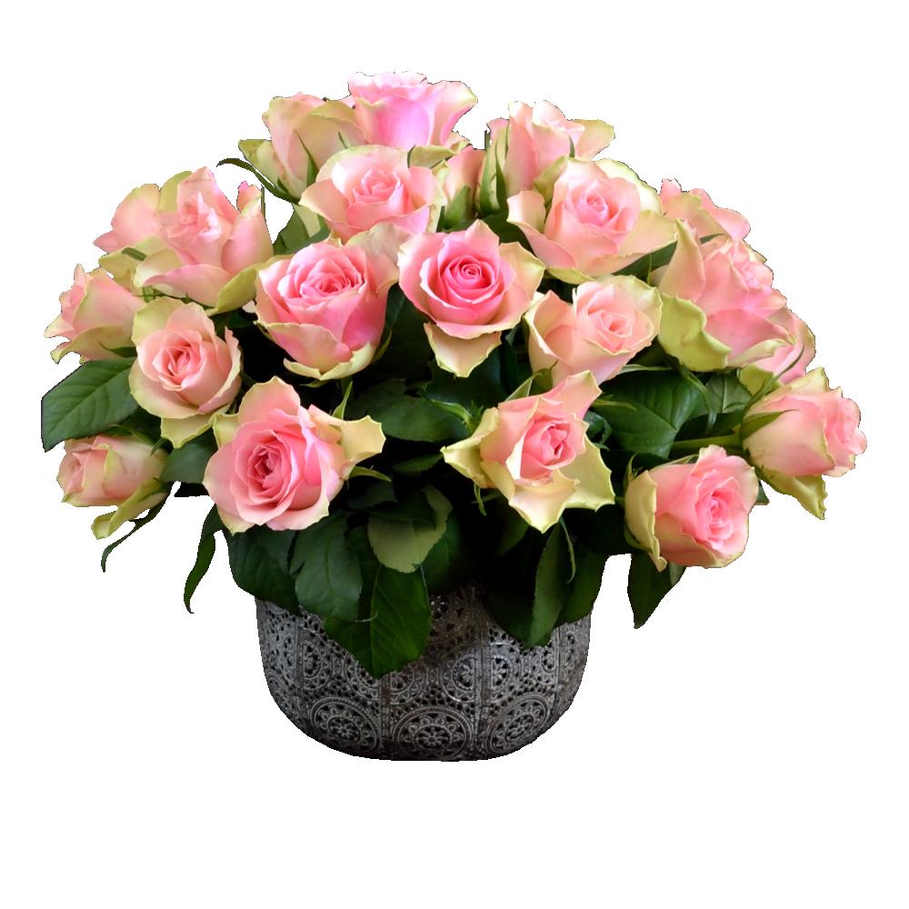 Ružovo-krémové ruže