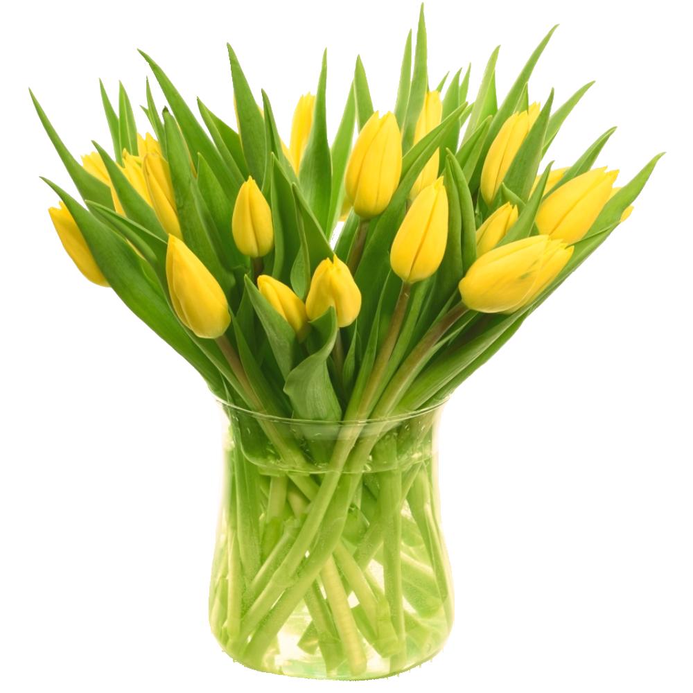 Žltý tulipán