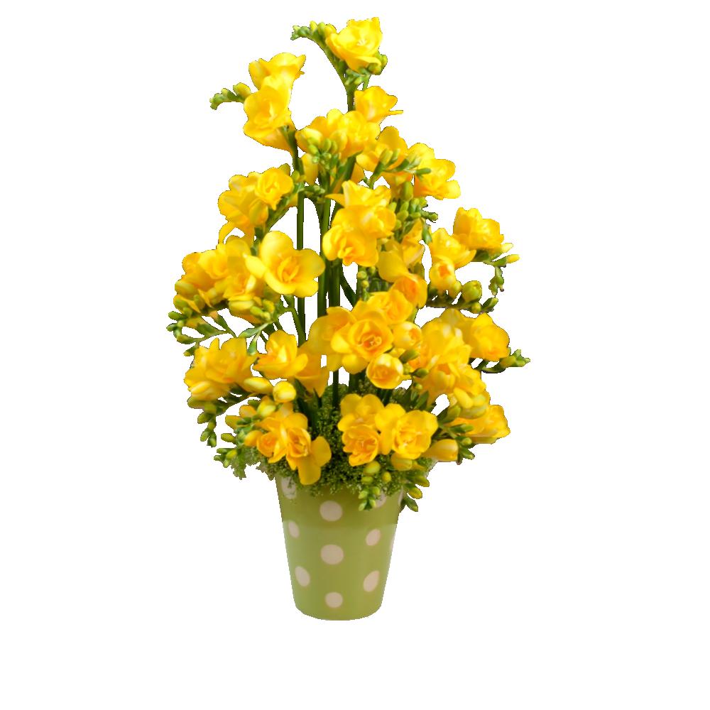 Žltá frézia
