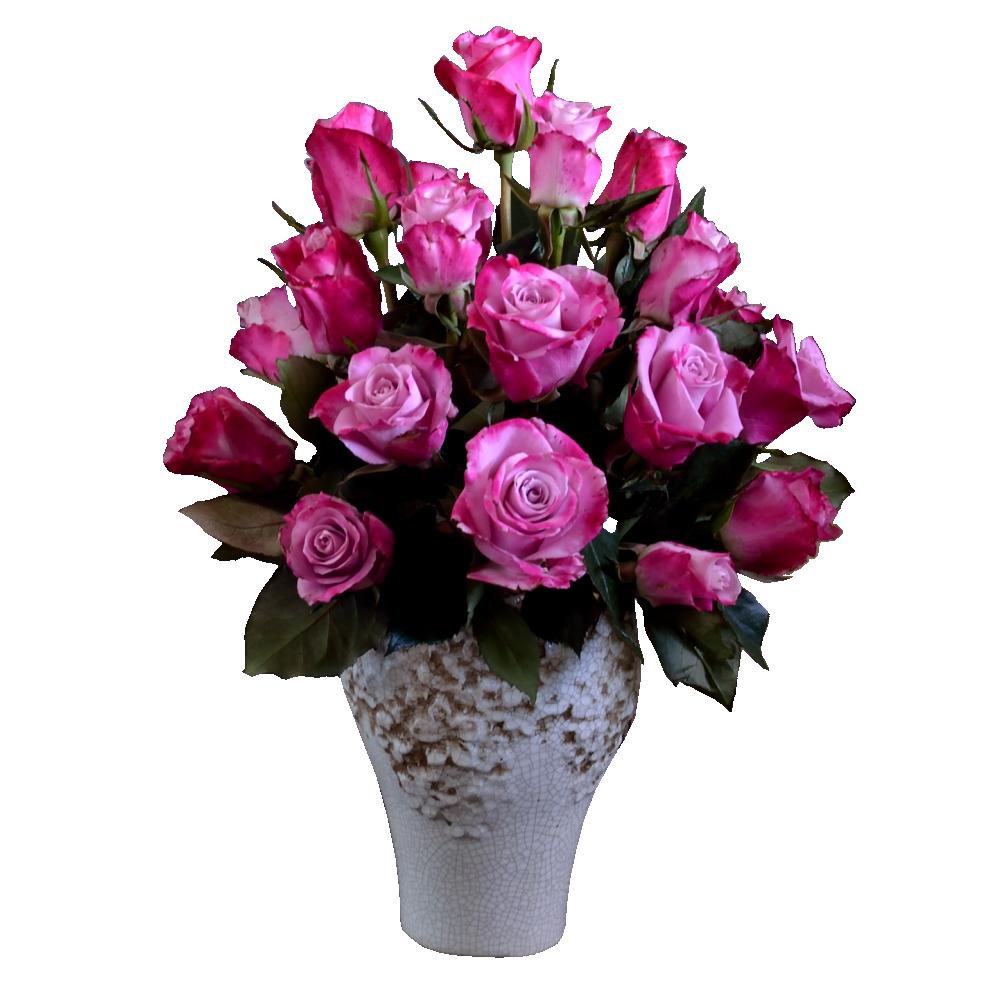Ružovo-fialové ruže