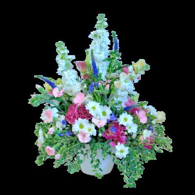 Tisíc bozkov lúčnych kvetov