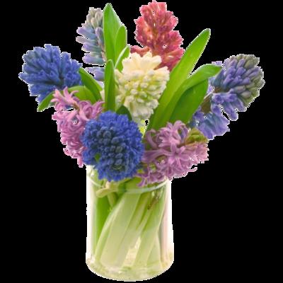 Pestrofarebné hyacinty