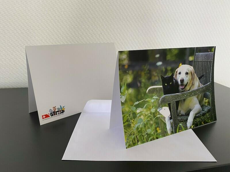 10 Karten mit Hund und Katze-Motiv inkl. Couvert