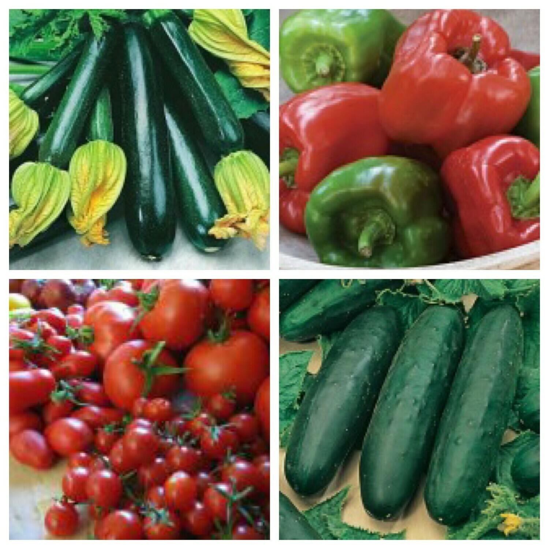 Organic Garden Bounty Sampler--Half Flat--8 plants