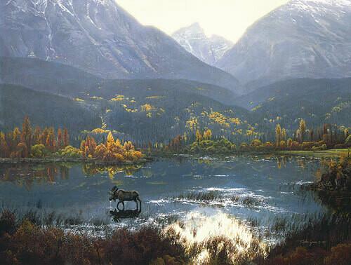 Canadian Autumn - Moose