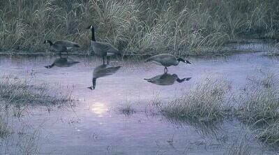 Moon Shadows - Canada Geese