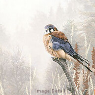 Among the Wild Brambles - Kestrel