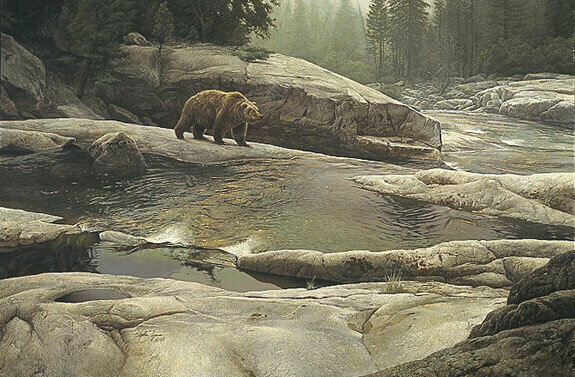 Uzumati - Great Bear of Yosemite