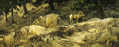 The Long Autumn - Bighorn Sheep