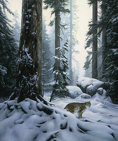 Snow Hunter - Bobcat