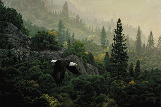 October Flight - Bald Eagle