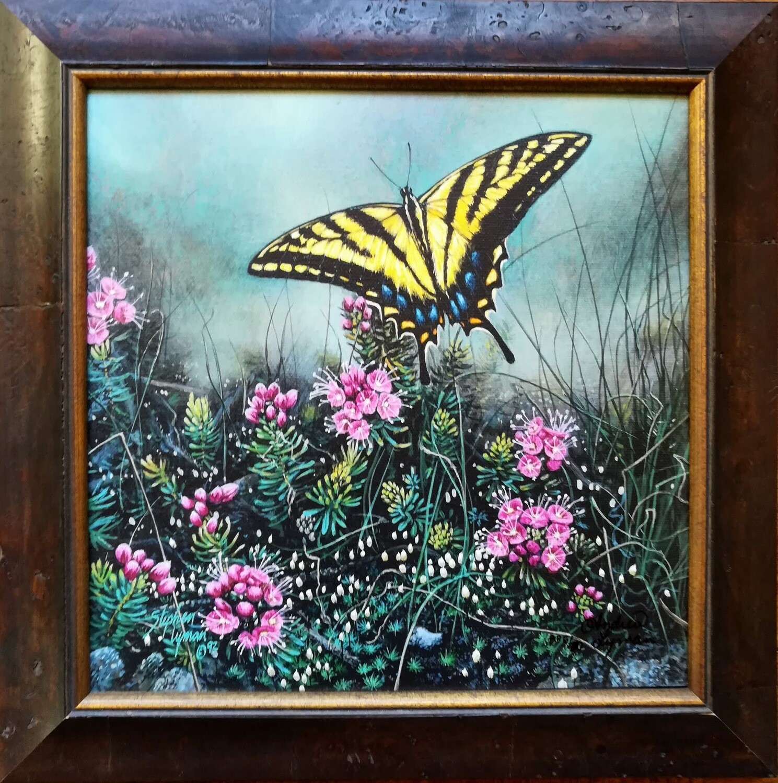 Swallowtail Butterfly - Framed