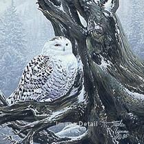 Snowy Throne - Snowy Owl