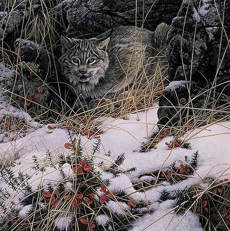 Secret Watch - Lynx
