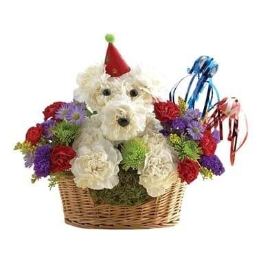 Birthday Dog-Able