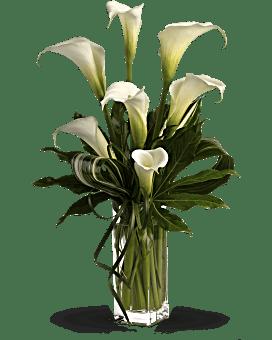 Grand Calla Lilies